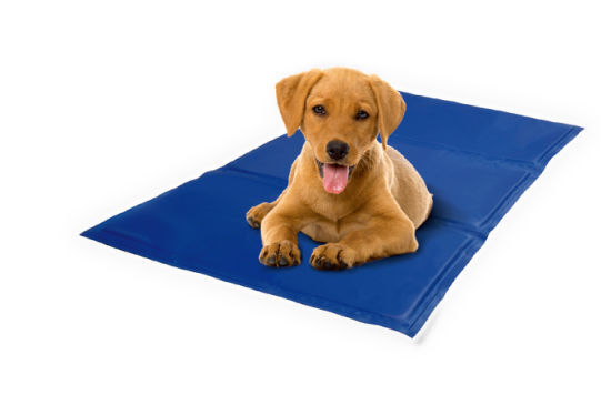 puppy laying on cooling pad