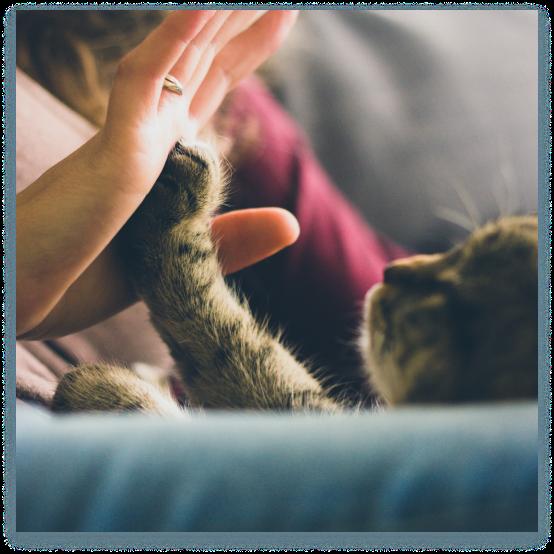 girl giving high-five to kitten