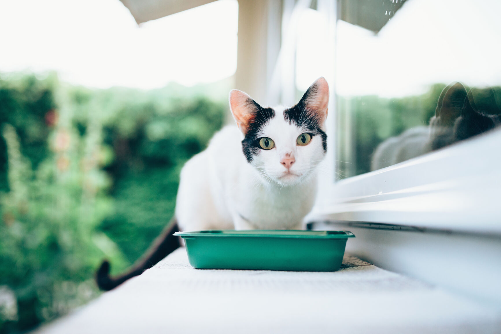 cat and food bowl outside on window ledge