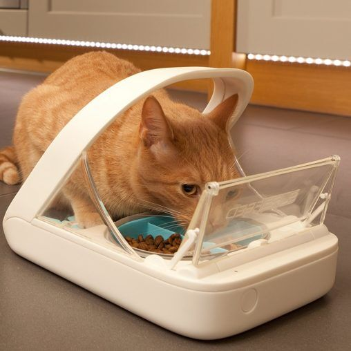 cat eating out of auto feeder