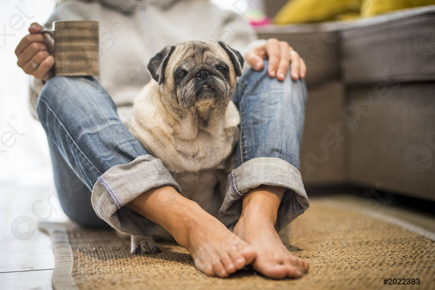 person with older dog sitting on floor