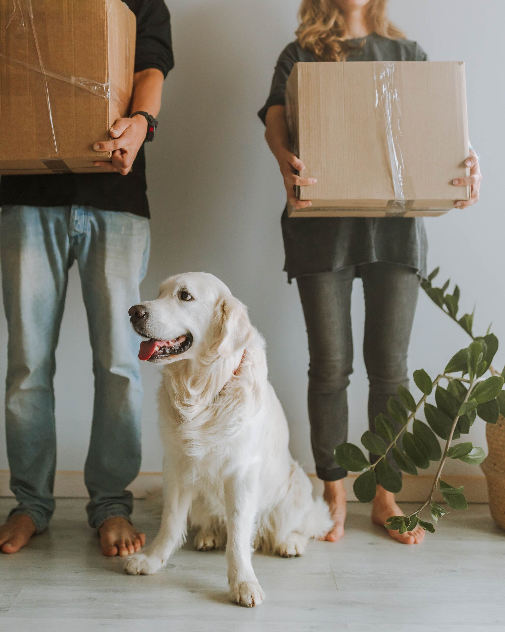 couple holding moving boxes with dog in between