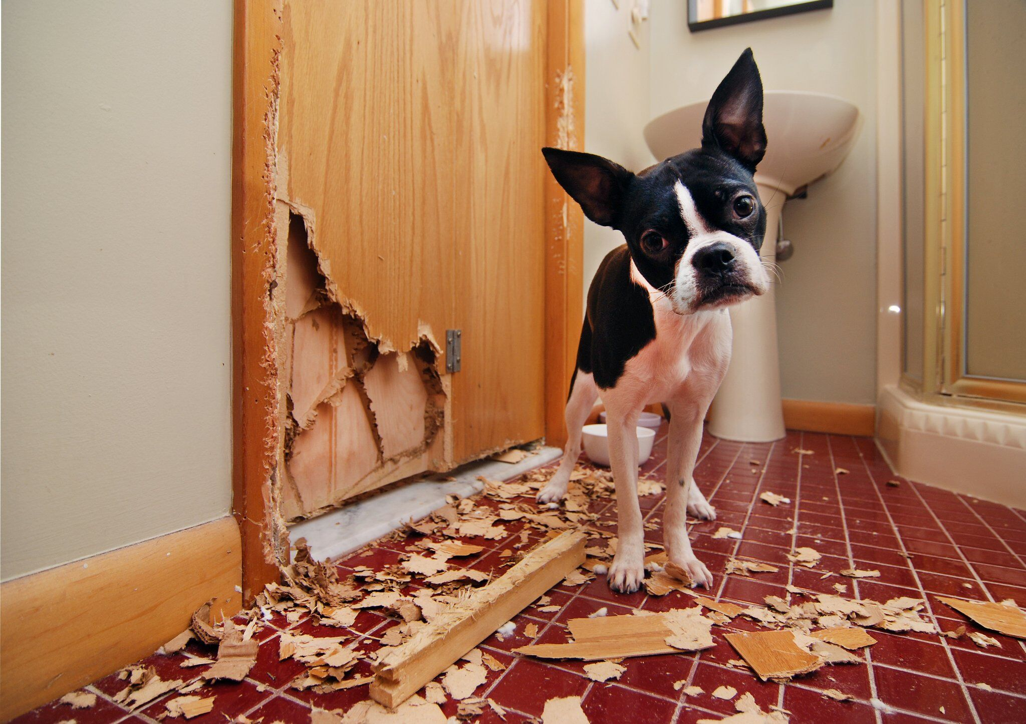 separation anxiety in dog's behavior could be destruction of property and home