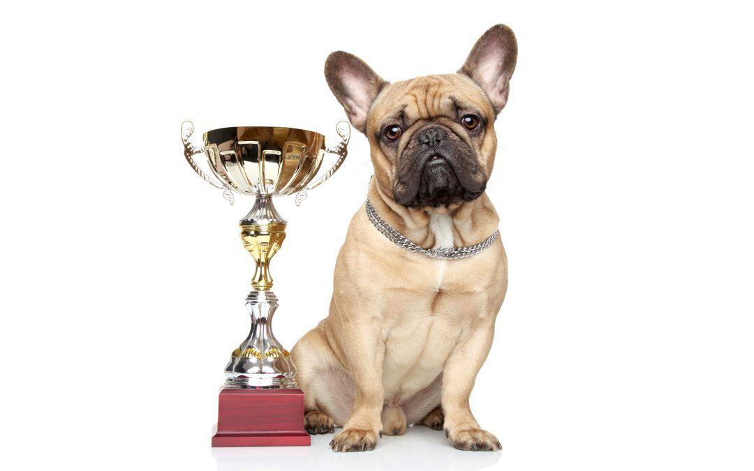 Airvet Earns 2021 Pet Innovation Award